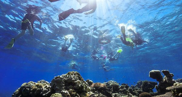 Big Cat Green Island Reef Cruises Snorkeling