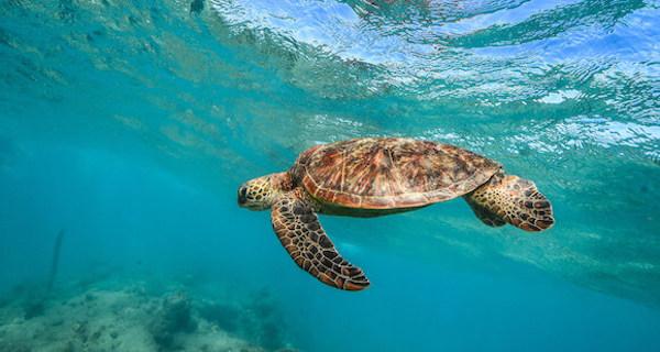 Green Island Half Day tour - Turtles
